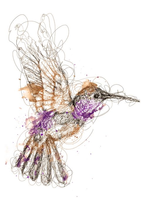hummingbird scribbles - izmo scribbles