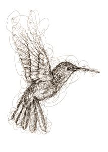 hummingbird scribbles