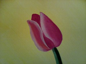 Lonely Pink Tulip Fantasy
