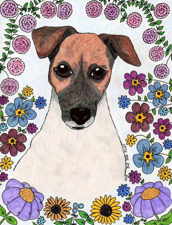 Jack Russell - Precious Paws