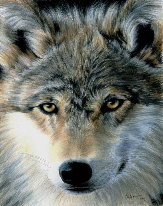 Young Wolf - Carla Kurt Art