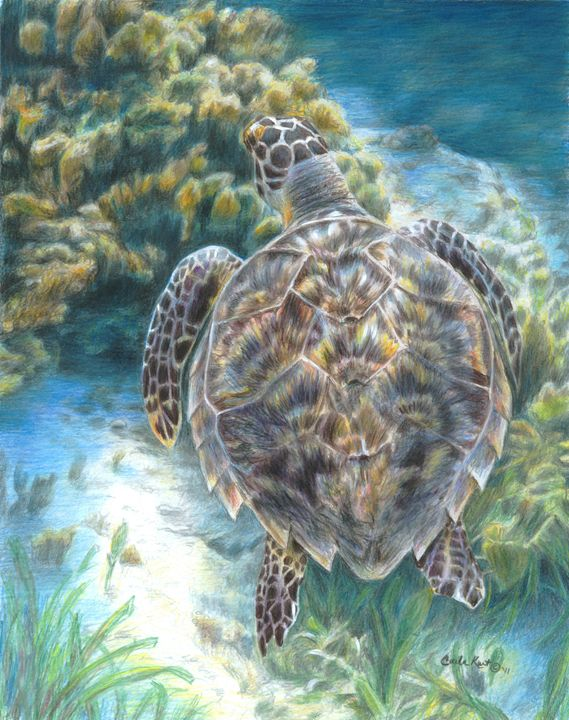 Swimming Turtle - Carla Kurt Art