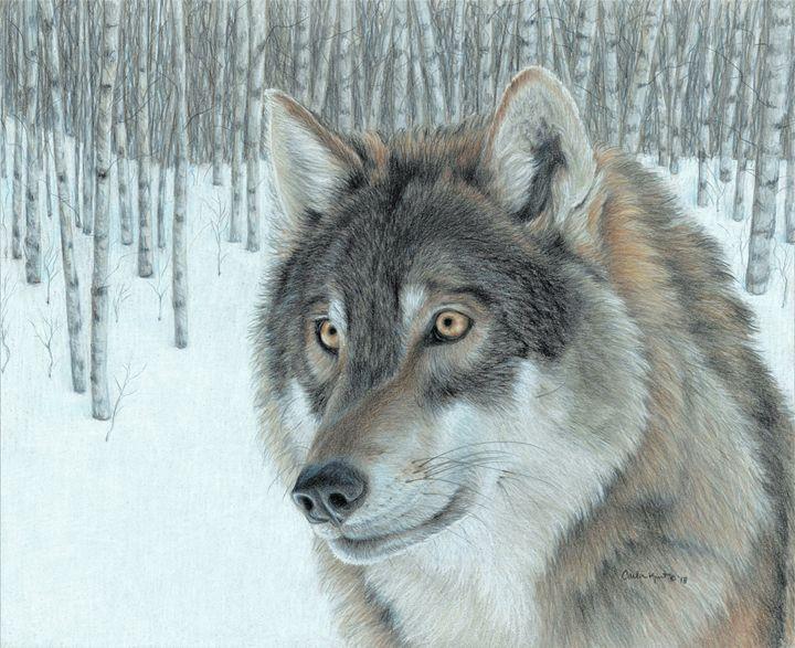 Wolf in Aspens - Carla Kurt Art