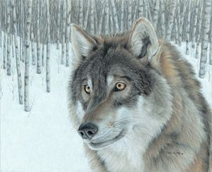 Wolf in Aspens
