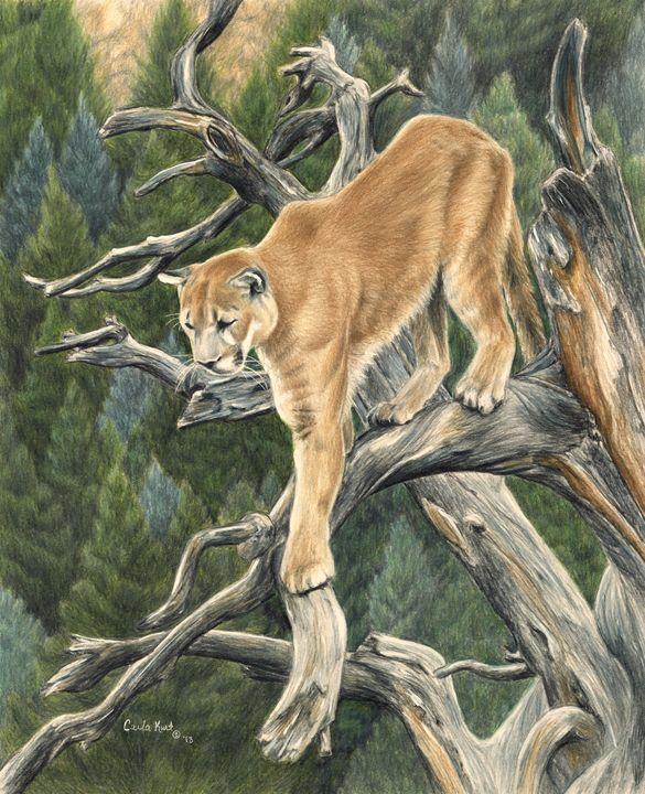 Mountain Lion - Carla Kurt Art