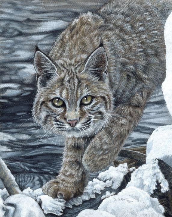 On the Prowl - Carla Kurt Art
