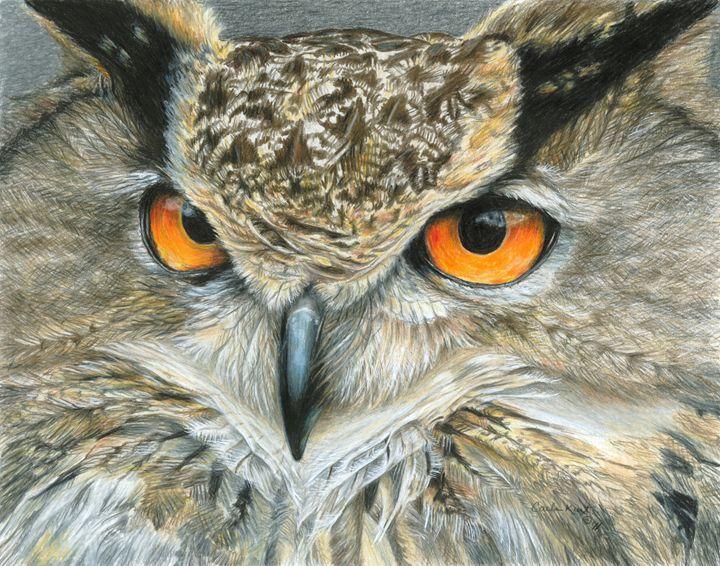 Orange-Eyed Owl - Carla Kurt Art