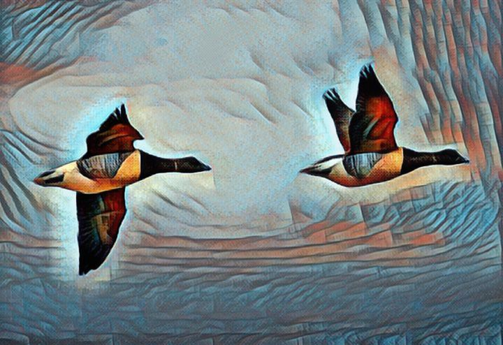 THE BRANT GOOSE FLYING OVER THE SKY - THE CREATION OF GOD