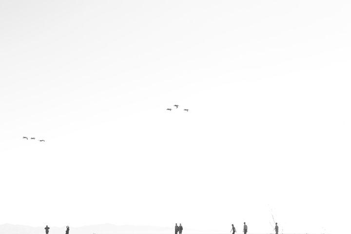 Migration - Diego E. Andrade