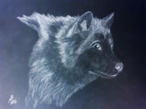 Dark wolf Gaze
