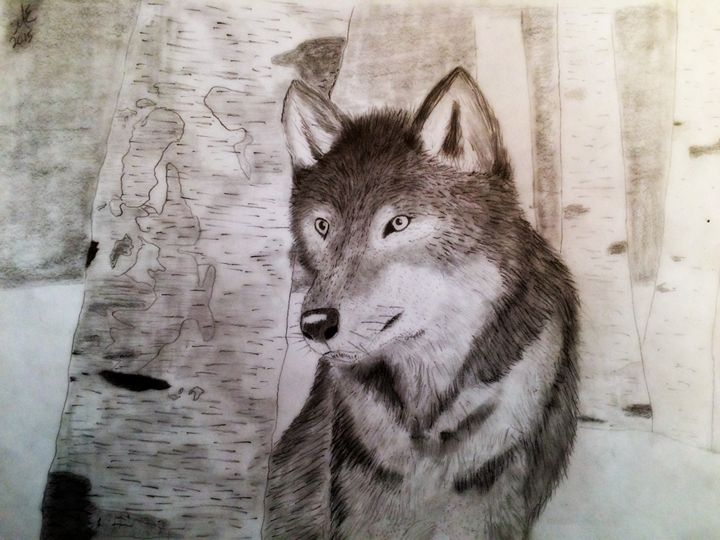 Wolf in the woods - Michael's Gallery