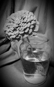 Flor de Genysis