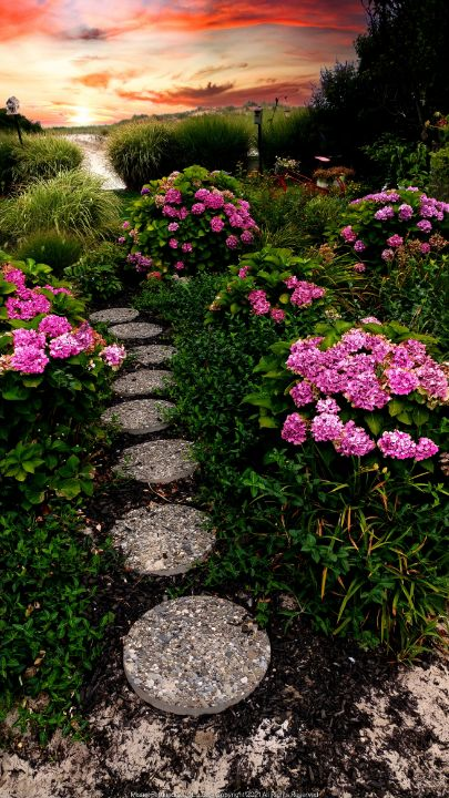 Stone Path To Dunes - Photography by: Misael Fernandez Jr.