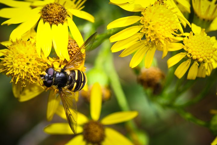 Spring Bee - Chelsea Moudry Photography