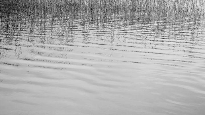 Bushes on Water - SevdaK