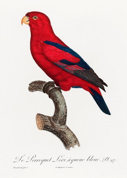 The Red Lory, Eos bornea from Natura - Rina