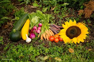 Fall Harvest 1