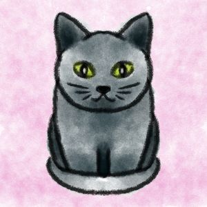 Pets - Cat - Shy Blueberry