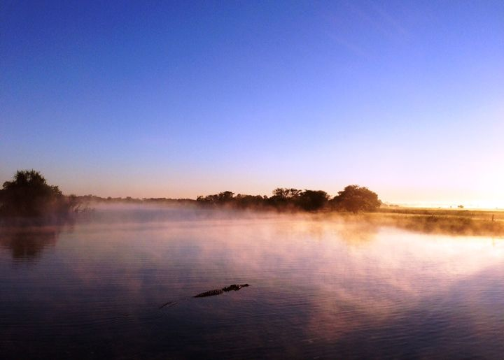 Crocodile sunrise - Tibzart