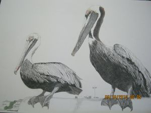 ceder key pelicans