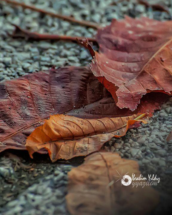 Yerdeki yapraklar - yyazilim