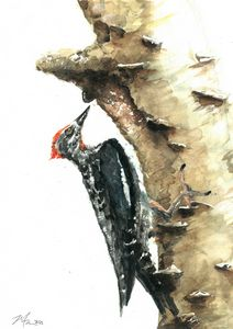 Woodpeckers are from Mars