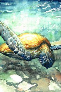 Sea Turtle in Sunlight