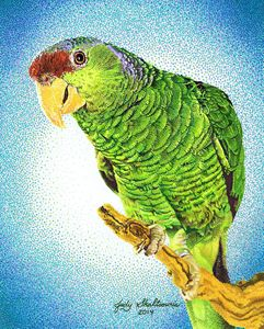 Wise guy the parrot