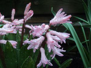 Beautiful Water flowers