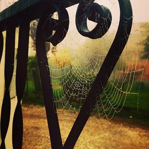 Wet Webs