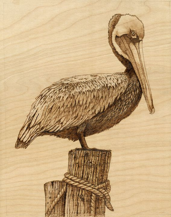 Brown Pelican Danette Drawings Illustration Animals Birds Fish Birds Pelicans Artpal