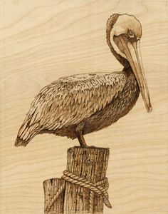 Brown Pelican - Danette