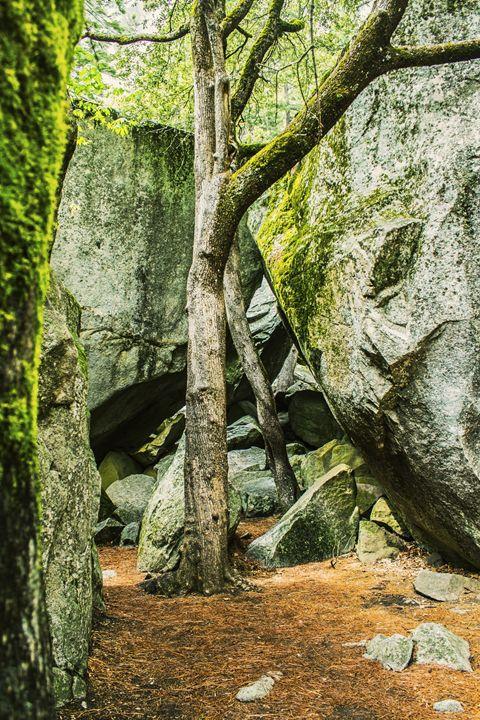 Moss Garden - Jesse Redheart