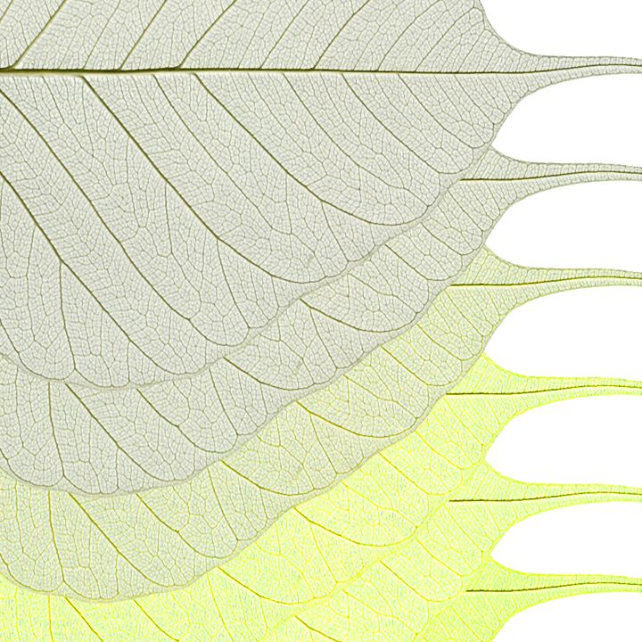 Yellow Green Gradient Leaves - Colin Bentham