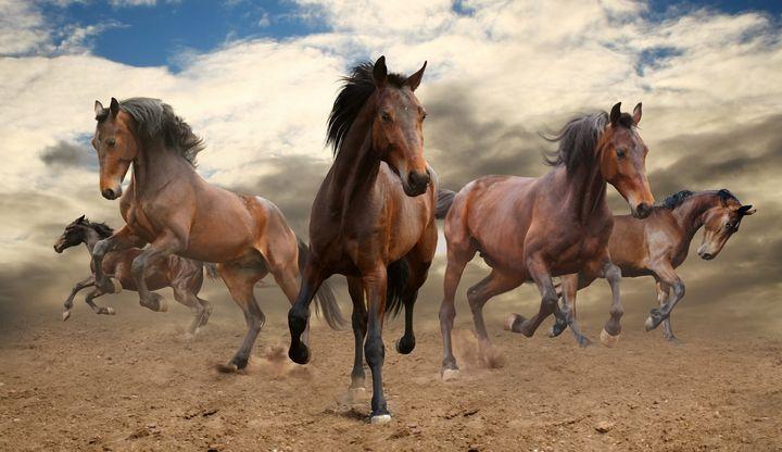 Stunning Herd Of Horses - PaST PReSENcE ArT