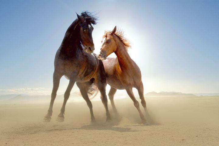 Two wild horses in the desert - PaST PReSENcE ArT