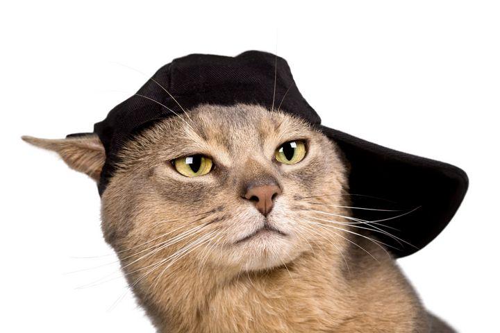 Abyssinian Cool Cap Cat - PaST PReSENcE ArT