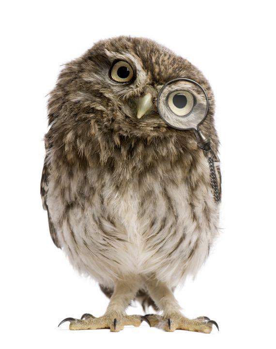 Adorable little owl - PaST PReSENcE ArT