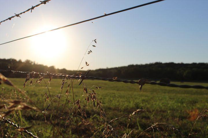 Greener pastures - Violetetiquette