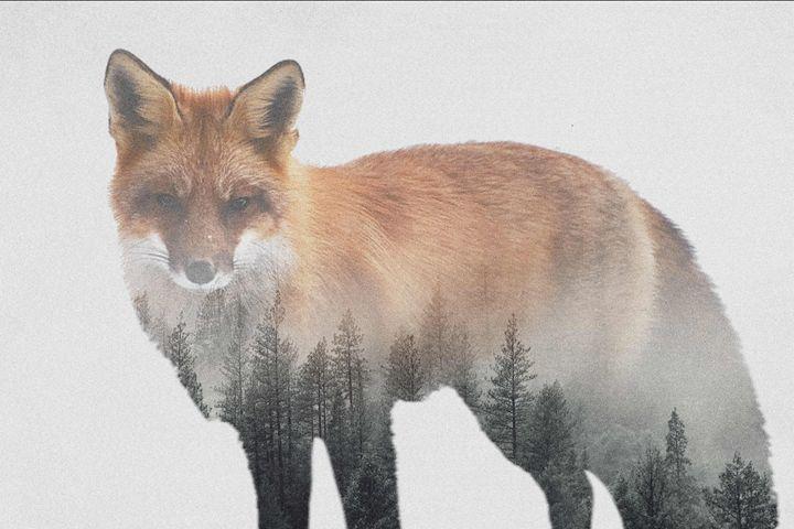 Foxy - Ypalis