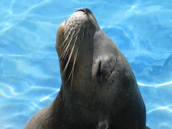 Sunning Sea Lion - Chris Crooks Photography