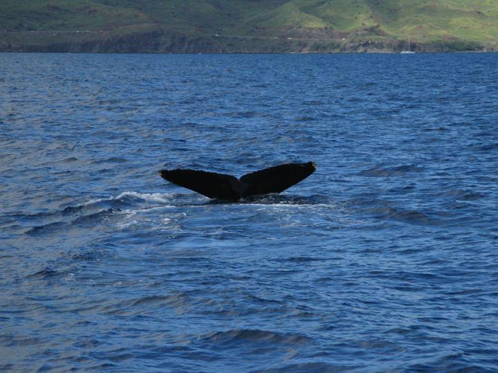 Humpback Whale Tail - Chris Crooks Photography