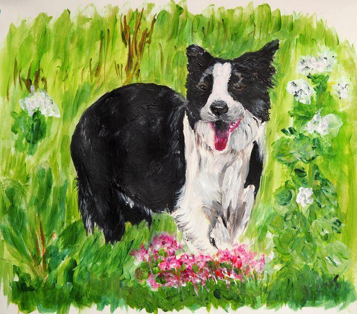 Border Collie in the garden - By Mris