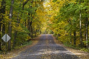 Arboretum Fall, Madison, Wisconsin