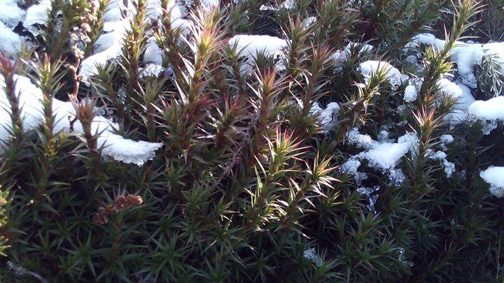 Winter Wonderland - Art philosophy