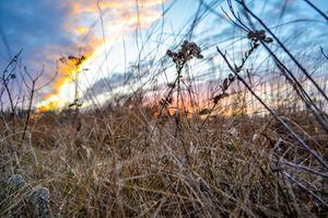 Wheat & Sky.