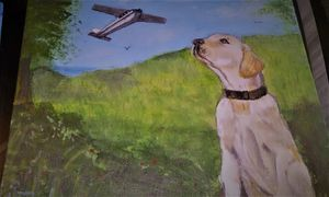 Dogs that can fly planes