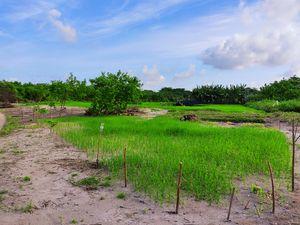 Maldives Farms
