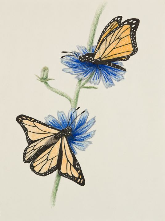 Butterflies - JK Art Life