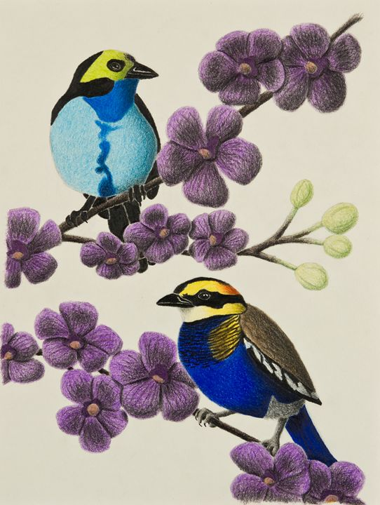 Paradise Tanager And Banded Pitta - JK Art Life